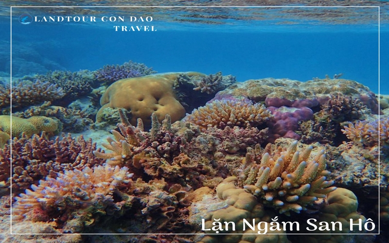 Lặn ngắm san hô - Du lịch cùng Landtourcondao
