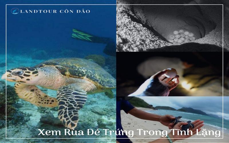 Xem Rùa Đẻ Trứng-Landtour Côn Đảo